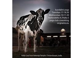 Permanentka na 10 lekcí kundalini yogy